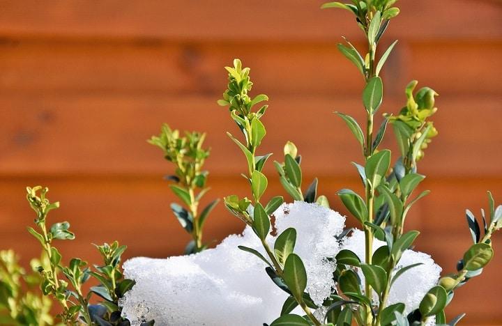 L'entretien des plantes annuelles en hiver