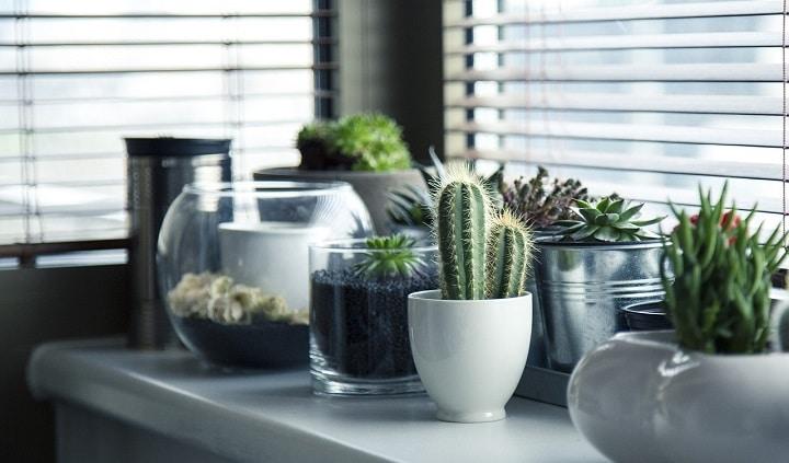 L'entretien des plantes d'intérieur en hiver