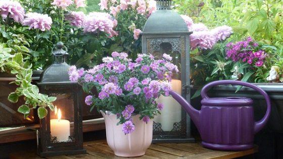 Quand et comment planter les bulbes de fleurs de printemps