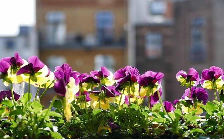 Quelles fleurs pour balcon de toute saison et facile d'entretien
