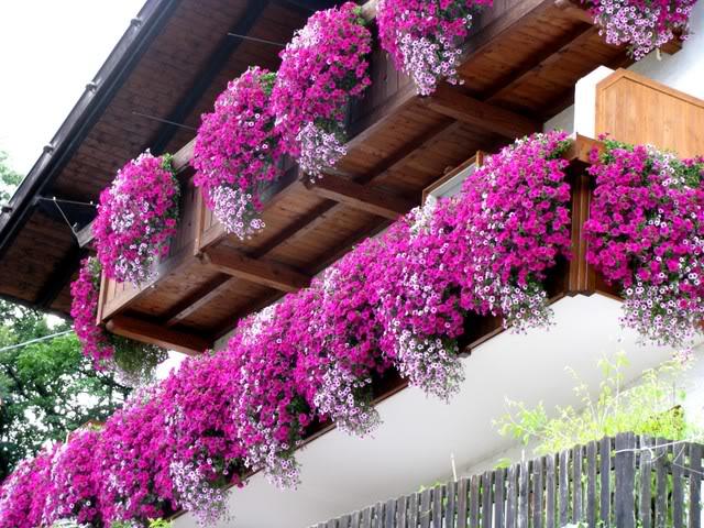 fleurs de balcon suspendues