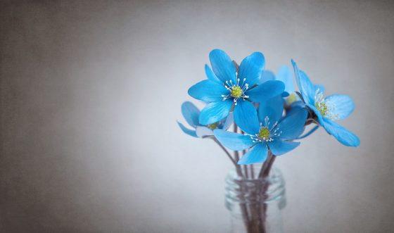 Comment conserver longtemps ces fleurs en vase