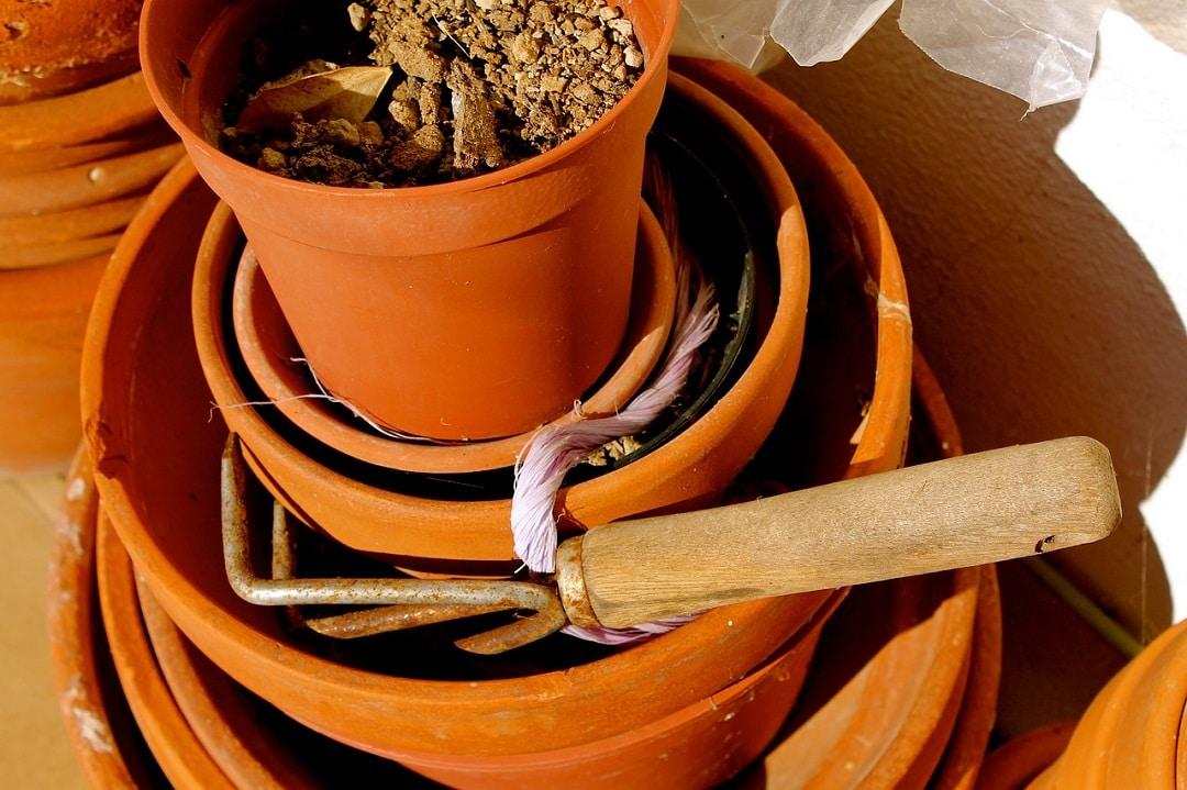 Comment rempoter ses plantes d'intérieur