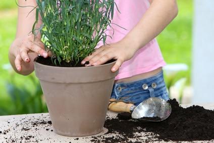 Rempotage plante intérieure
