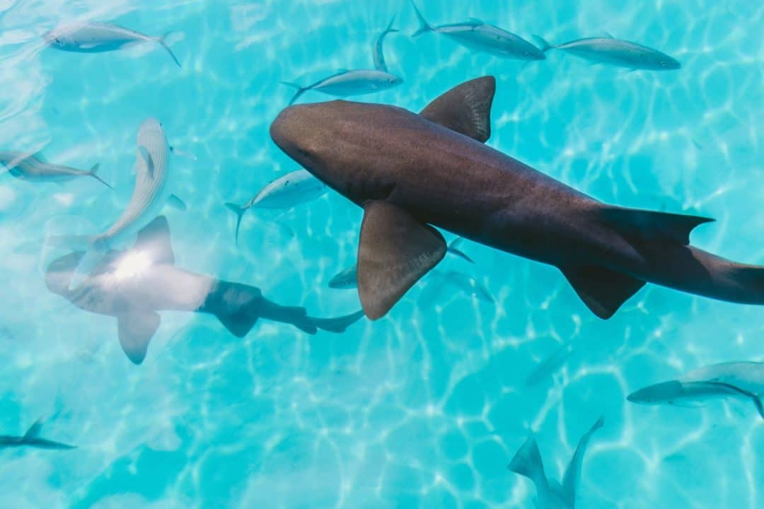 nager avec les requins activites fun entre copines evjf