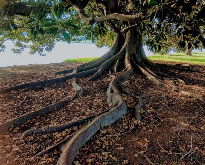 arbre de vie symbolique