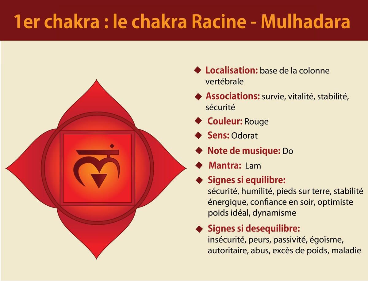 1er chakra racine Mulhadara
