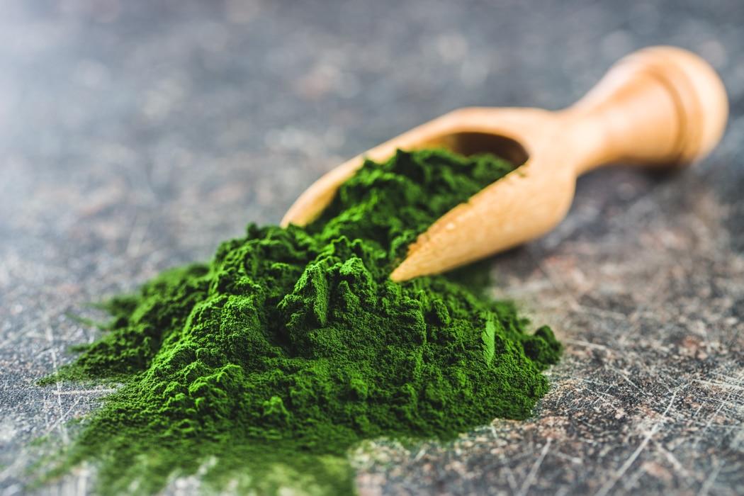 plantes brule graisse chlorella